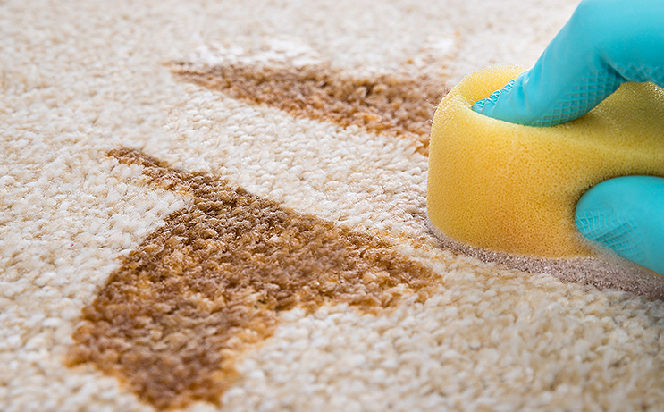 A Few Minor Problems to Consider with Stain Resistant Carpet