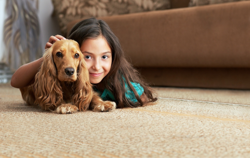 4 Key Steps to Help Prevent Pet Carpet Damage
